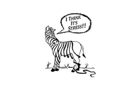 Zebra losing stripes